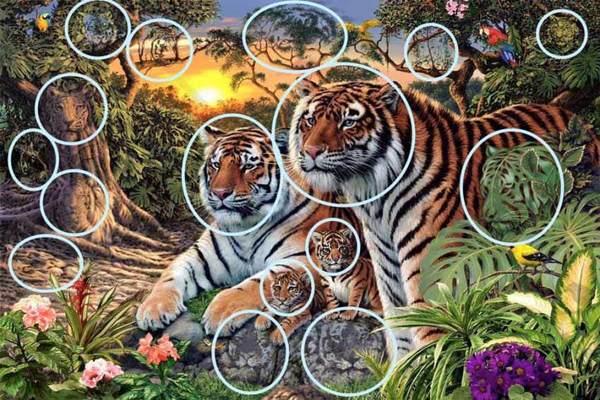 tigrar3