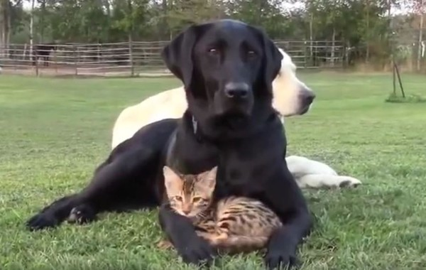 dog and kitten 1
