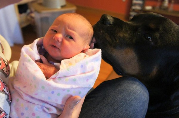 pups and babies 10