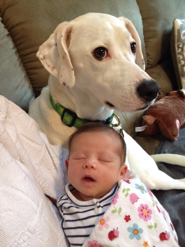 pups and babies 12