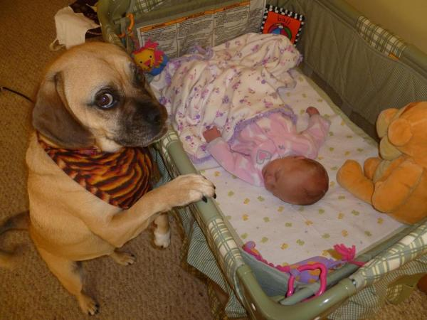 pups and babies 14