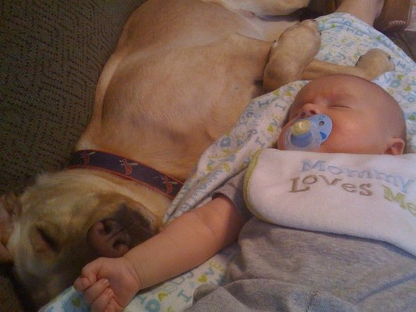 pups and babies 18