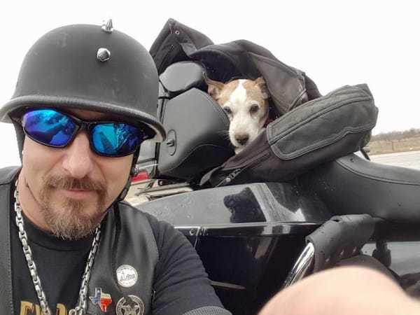 biker-dog-2.jpg