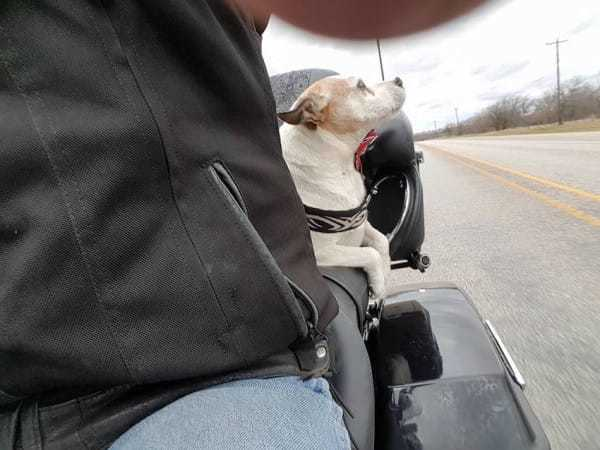 biker-dog-1.jpg