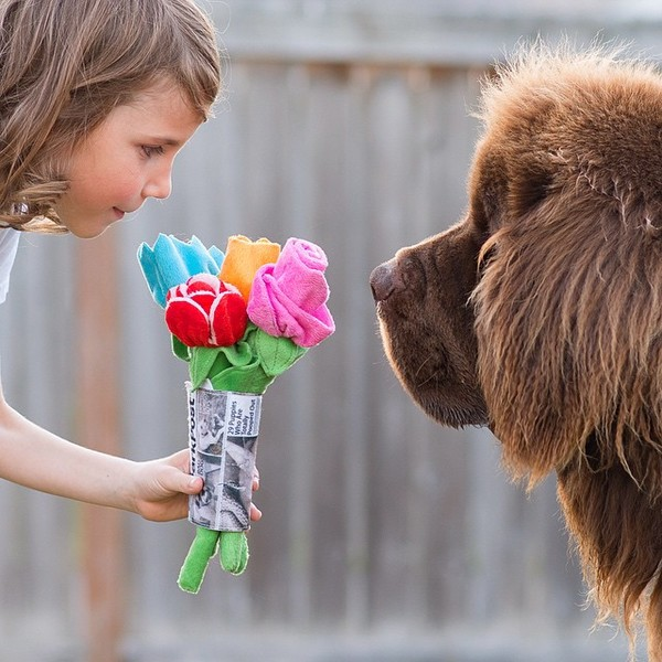 mom-photographs-son-dogs-horse-friendship-stasha-becker-julian-90