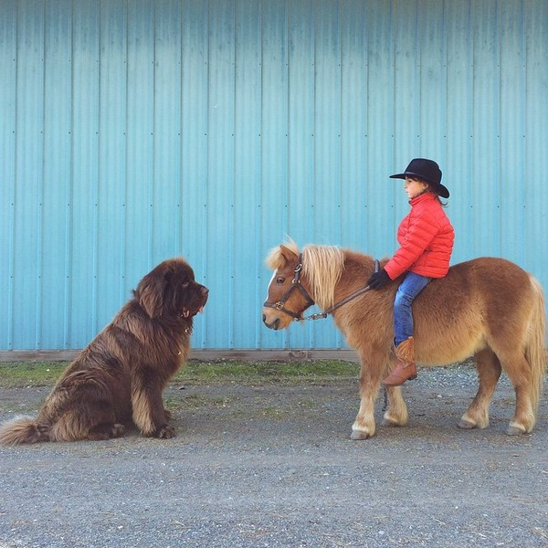mom-photographs-son-dogs-horse-friendship-stasha-becker-julian-145