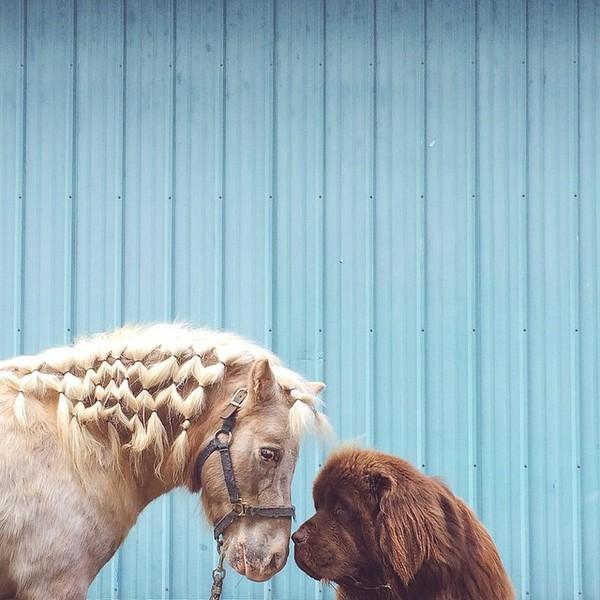 mom-photographs-son-dogs-horse-friendship-stasha-becker-julian-152