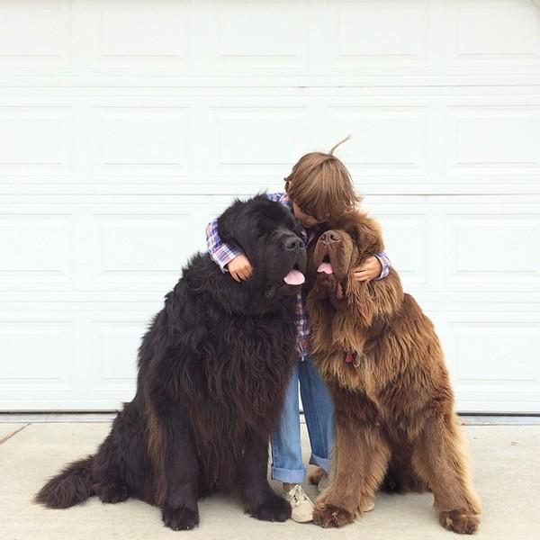 mom-photographs-son-dogs-horse-friendship-stasha-becker-julian-159