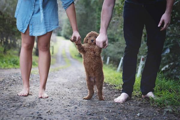 bebishund5