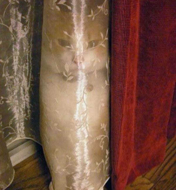 ninja-cat-hiding-funny-103__605