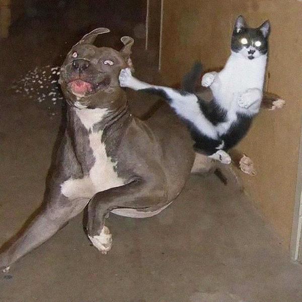 ninja-cat-hiding-funny-105__605