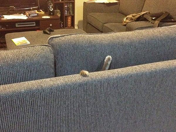 ninja-cat-hiding-funny-1__605
