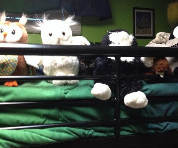 ninja-cat-hiding-funny-25__605