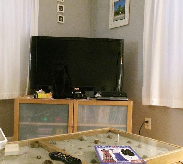 ninja-cat-hiding-funny-52__605