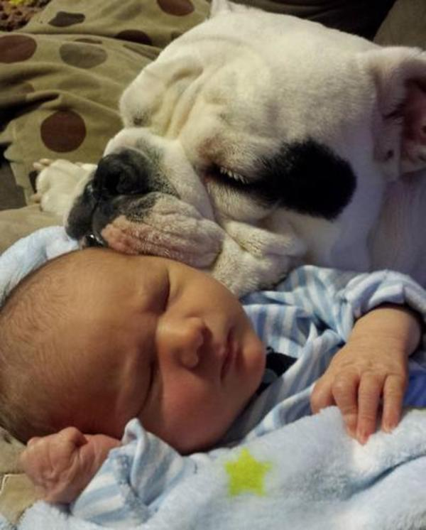 pups-and-babies-1 (1)