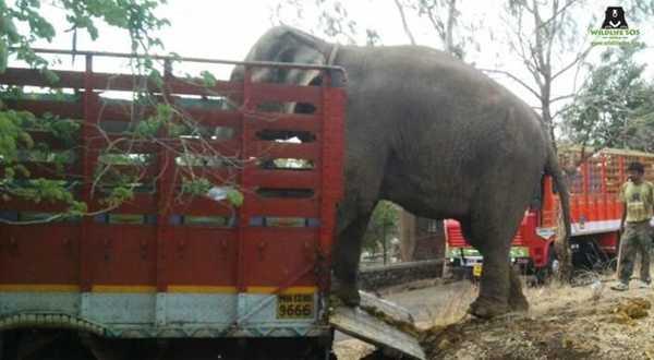 elefant5