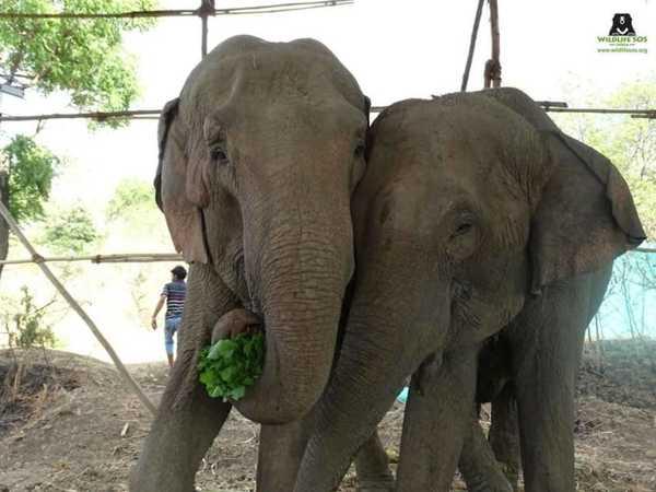 elefant11