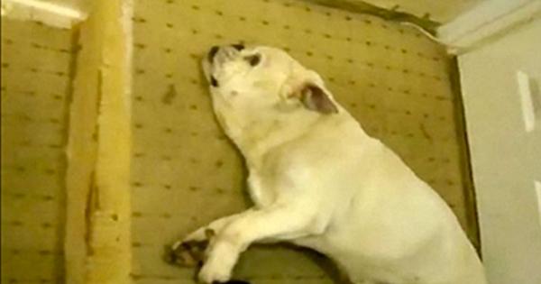 misshandelhund