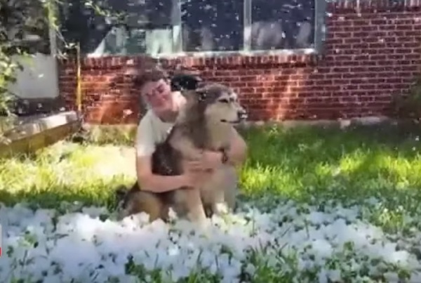 dog_snow_3
