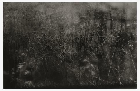 Sian Pile, Undergrowth