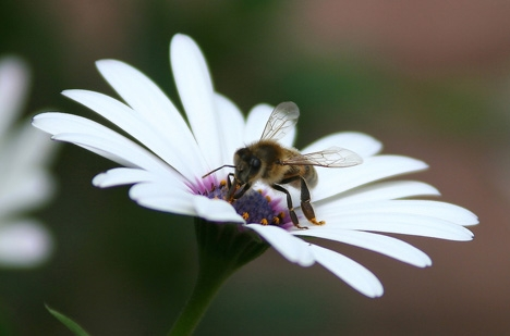 /j/s/t/urban_bee_hives.jpg