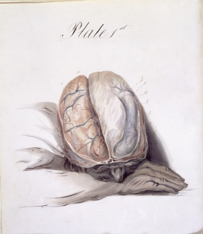 Sir Charles Bell, The Anatomy of the Brain