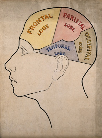 Head divided into four cerebral lobes