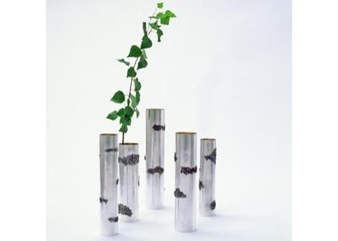 Birch Trunk by Olle Olls