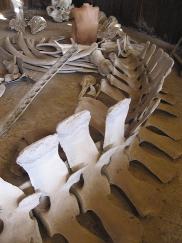 Bone room, Dorothy Cross 2007