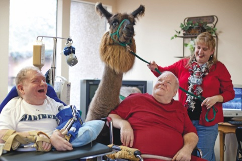 Llama therapy, from the Happiness issue