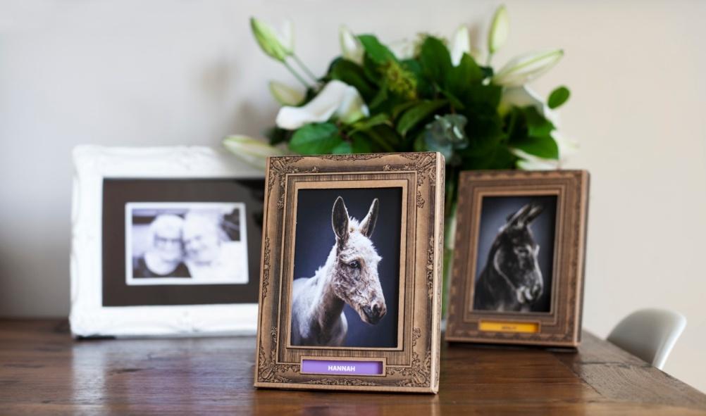 Donkey family memories