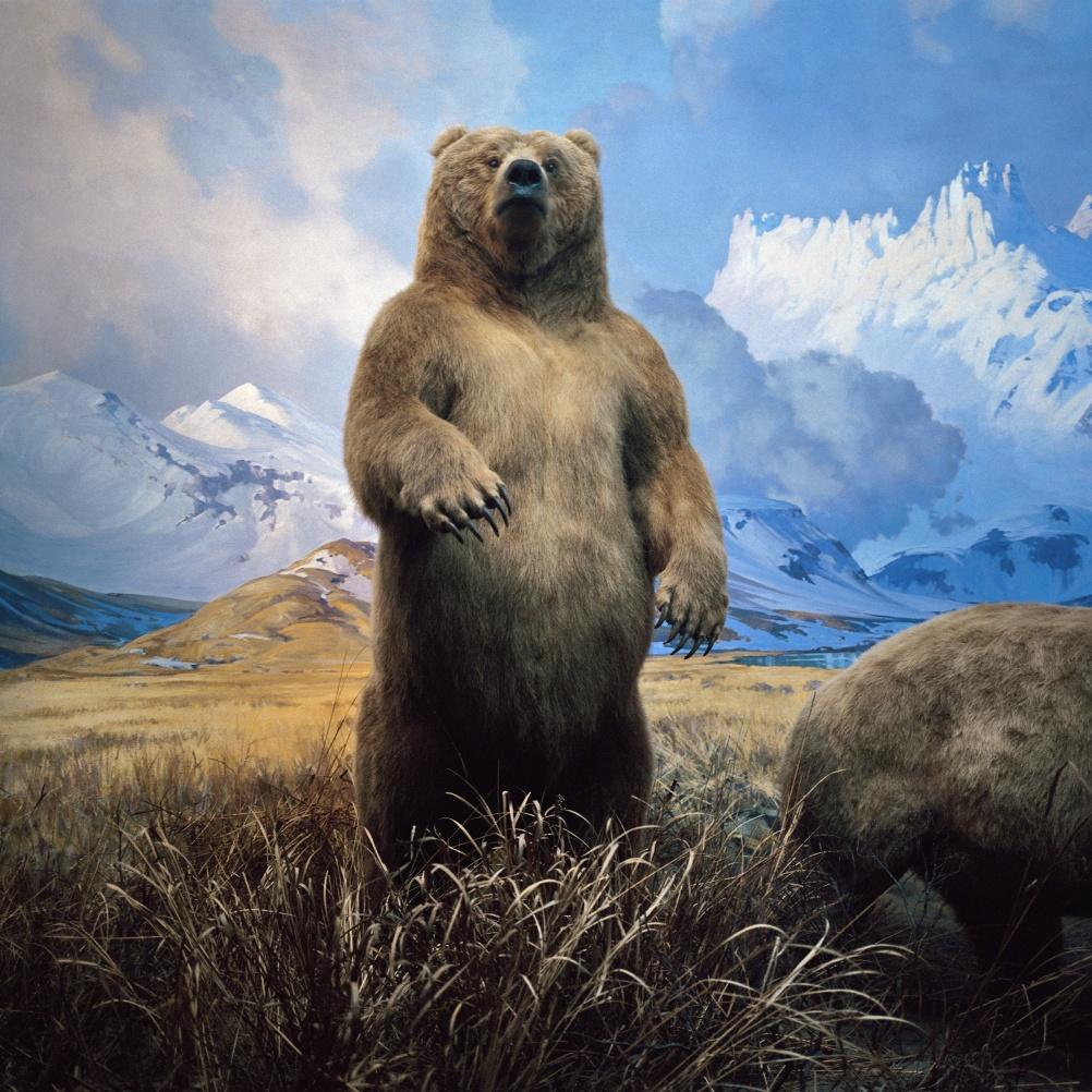 Karl Grimes, Brown Bear, 1998