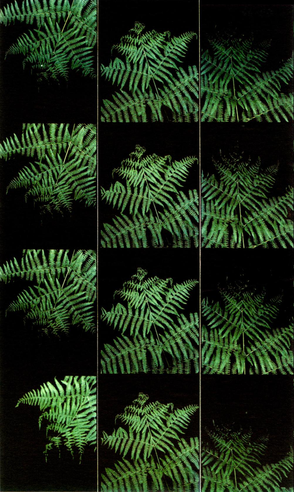 Liz Rideal, Finger Ferns, photobooth photos, 2000