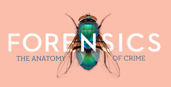 Forensics the Anatomy of Crime