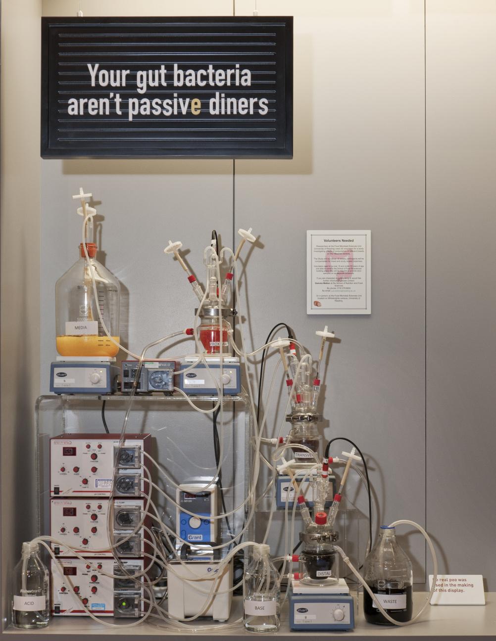 Laboratory model of a human colon