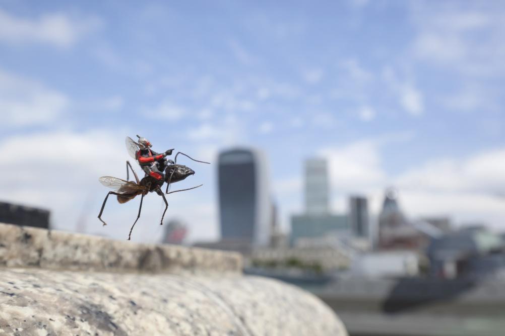 ant man flying 1
