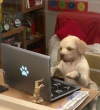 Andrex Puppy advert