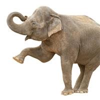 /q/g/h/embracing_the_elephant.jpg