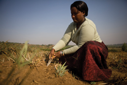 Oxfam-farmer-in Rwanda-2013-250