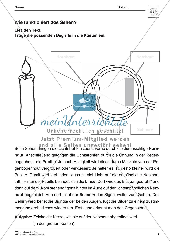 Großzügig Foto Auge Schaltplan Bilder - Elektrische Schaltplan-Ideen ...
