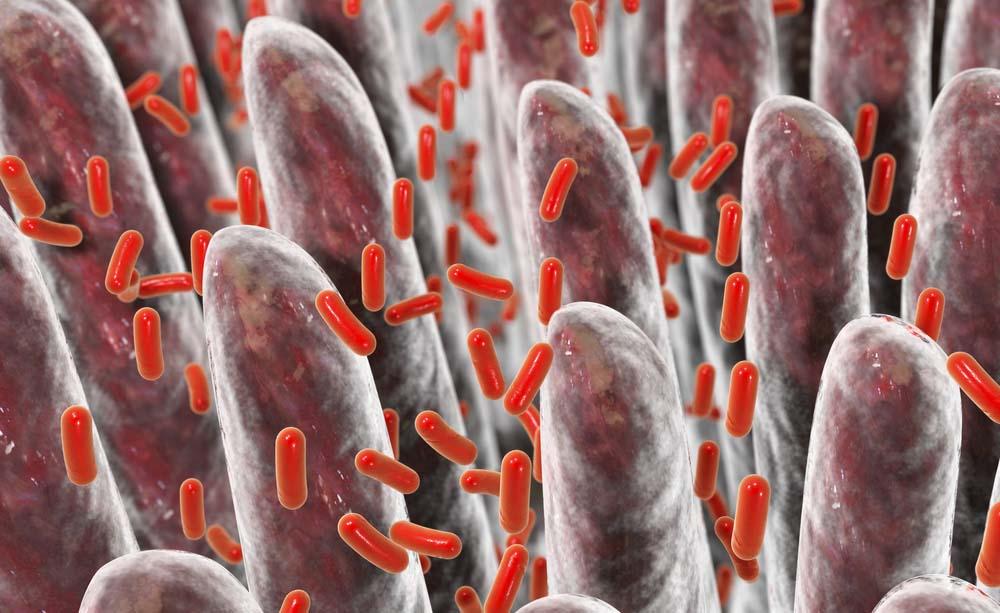 Batteri intestinali: come sono