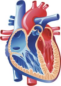 Difetto del setto ventricolare   Pazienti.it