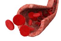 Globuli rossi (cosa sono, valori, funzione)    Pazienti.it