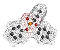 Fosfatasi alcalina | Pazienti.it