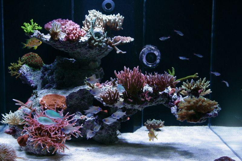 aquascape2.thumb.jpg.f170062686e3ac55052