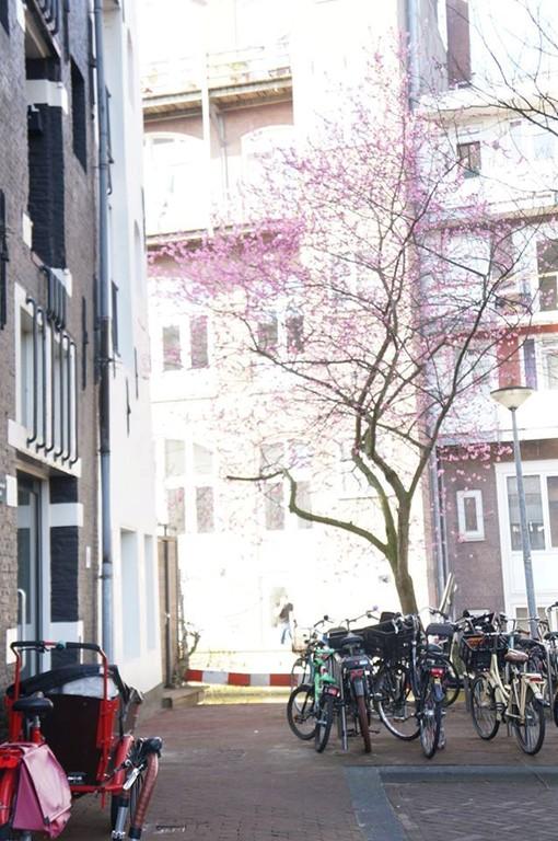 Vierwindenstraat 229