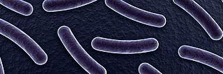 Der Virus A/H1N1