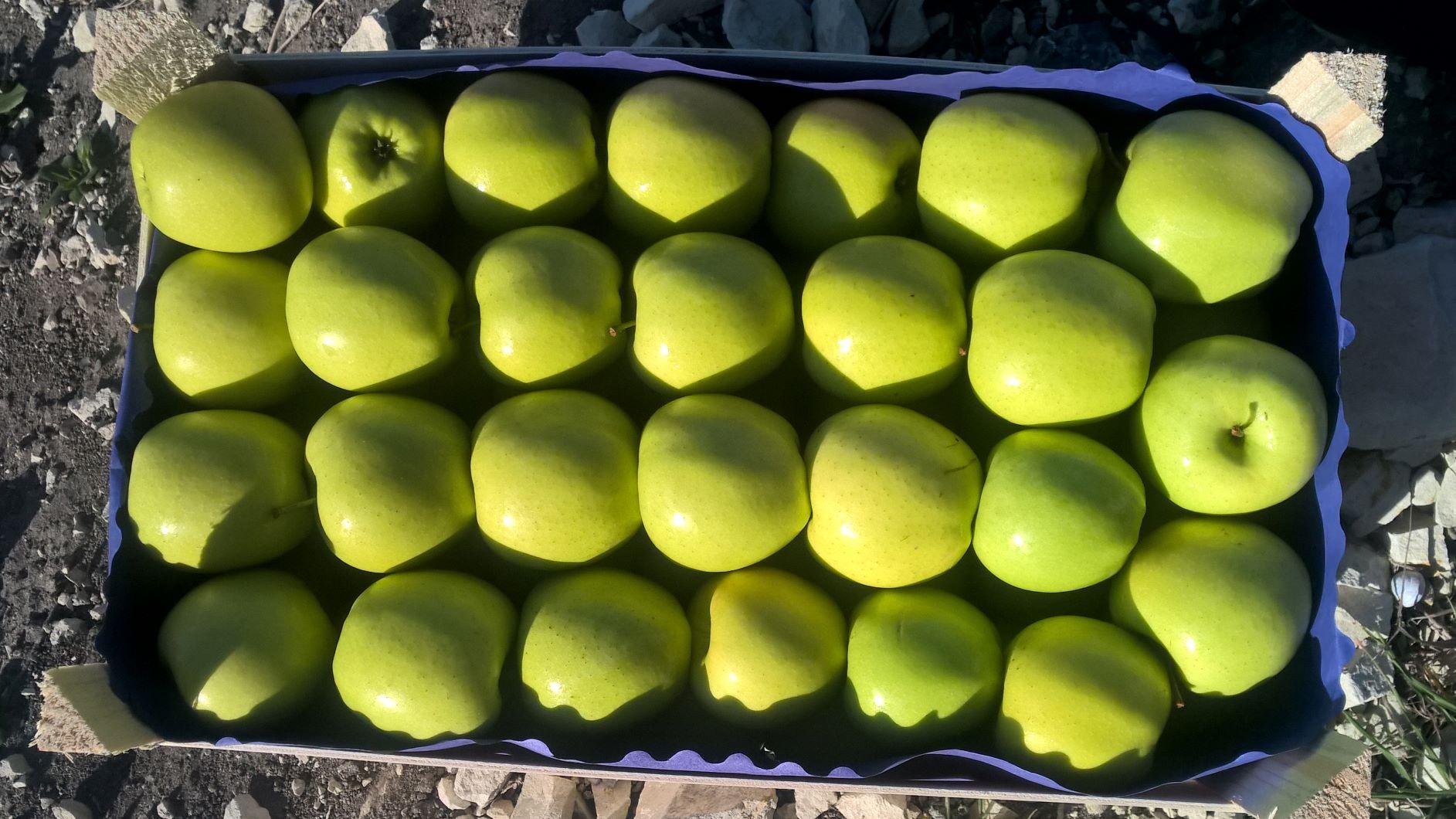 jablko-polskie---standard-bialorus-rumunia-ukraina-litwa---rozne-odmiany-i-pakowanie