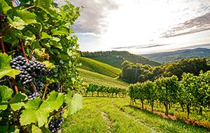 Ontdek de wijnen