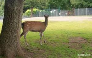 Wild- und Freizeitpark Klotten-Cochem
